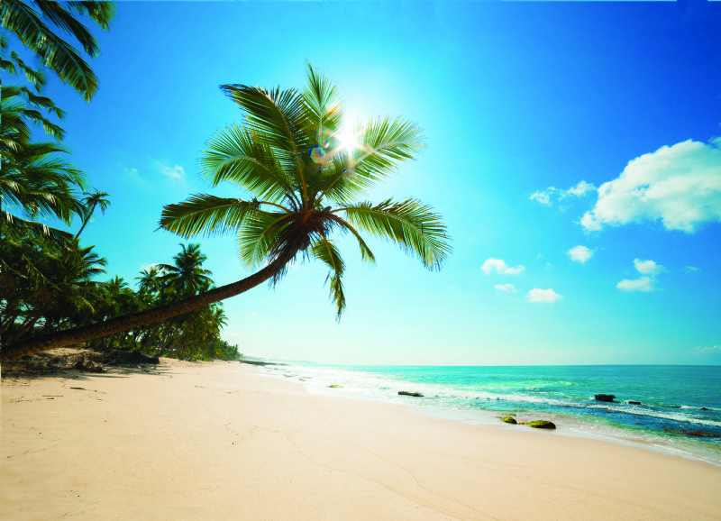 caribbean coast(6)